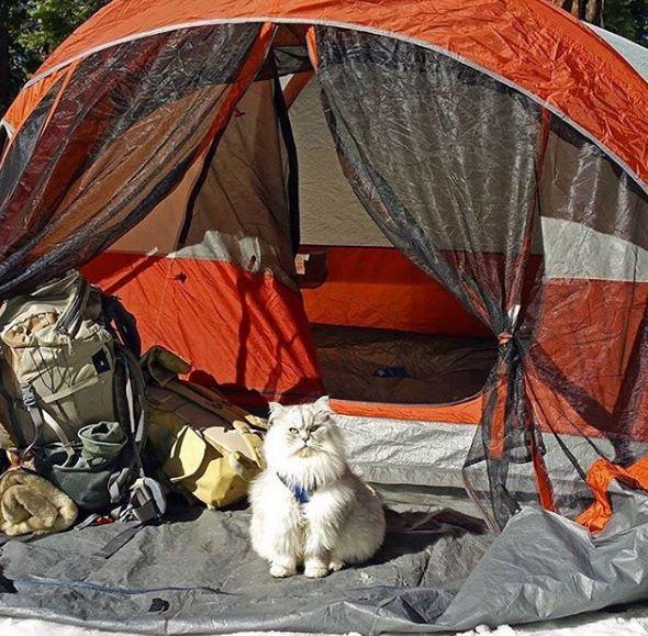 faire du camping avec son chat