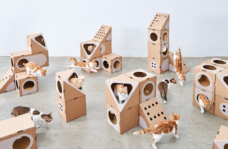 parc de jeux chat