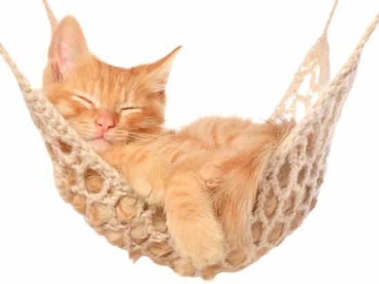 chaton sur hamac